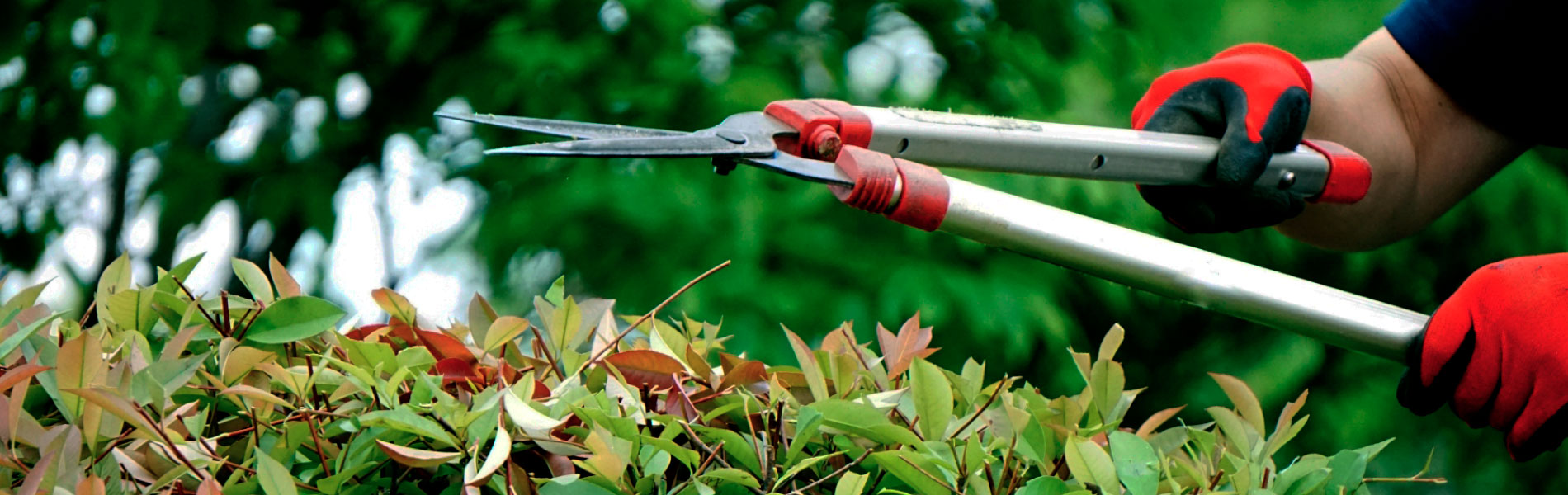 大田区の植木屋 Greendeco(グリーンデコ) - 女性庭師による庭木の剪定・ガーデニング・花壇の管理